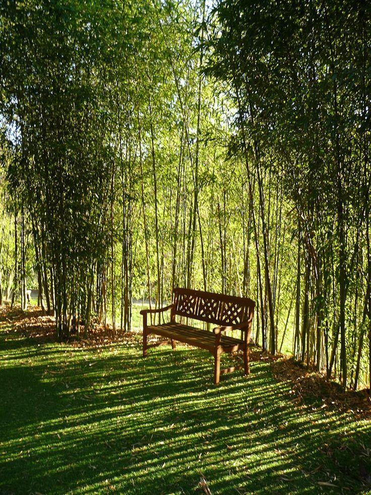 78 best id es propos de haie bambou sur pinterest - Haie de bambou en pot ...