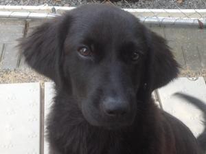 Dog Training Yardley Pa