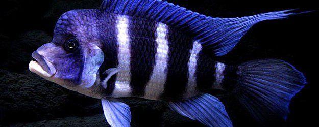 Ryby akwariowe; katalog online