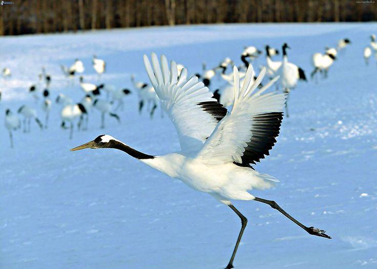 Ptaki, Śnieg