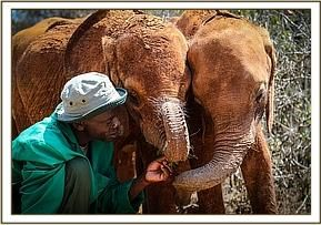 The David Sheldrick Wildlife Trust Updates