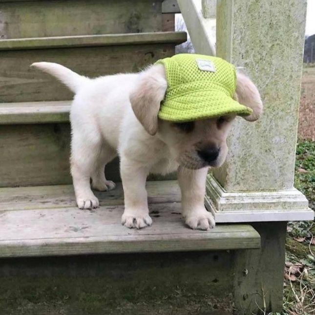 Super Cute Dog Hat Super Cute Dogs Cute Animals Puppy Hats
