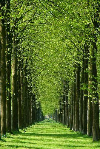 List of Pictures: Green Path, Het Loo, Apeldoorn, Netherlands