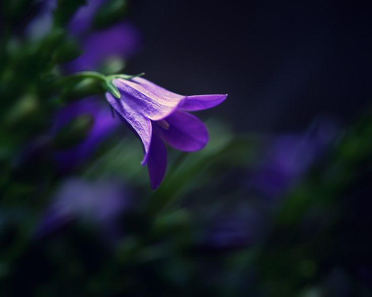 Purple Tinker bell