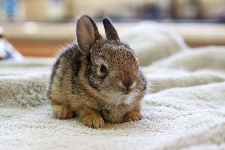 #brown #rabbit   15 Most #Cutest #Rabbit pics