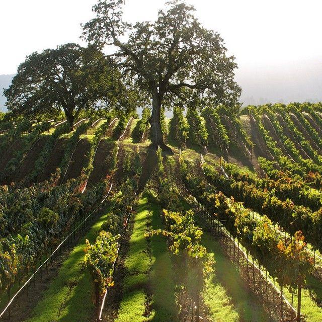 La vallée de Sonoma au nord de San Francisco est une des régions viticoles les plus célèbre des États-Unis. Un incontournable de la #Californie  #voyagevoyage #destinations #sonoma #voyage #blogvoyage #travelblog #travel #California #instatravel
