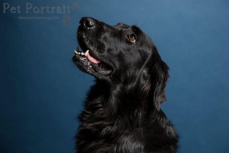 Hondenfotograaf Amsterdam - PetPlan Winner actie - Honden op de Winnershow-17