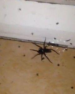 L'arachnophobie est l'une des phobies spécifiques les plus répandues au monde.