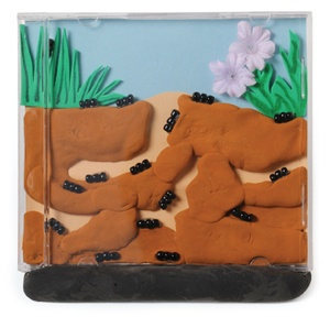 Recycle an old cd case to make an ant colony in this creative kids craft!