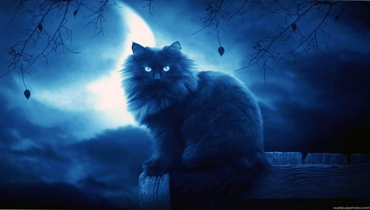 Cute Wallpapers With Quotes For Facebook Cover Blue Black Cat With Wings And Moon Fantasy Images Cat