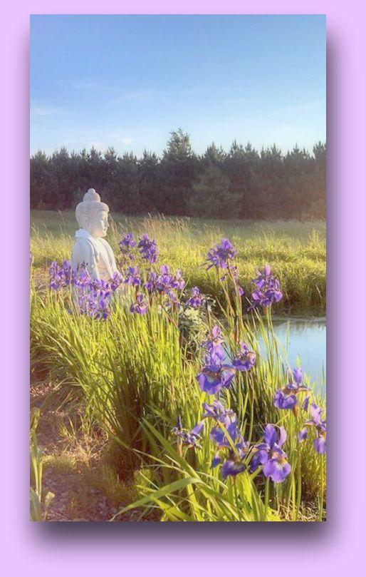 19 Best Lotus Lake Buddhist Center Gardens Images On Pinterest Lotus Lotus Flower And Lotus