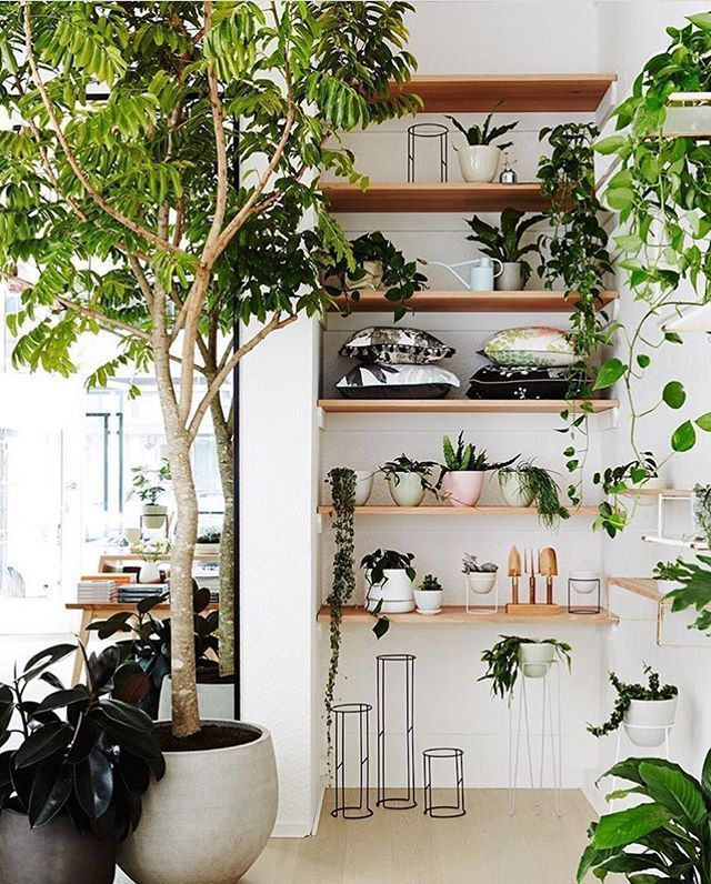 shelves and urban jungle