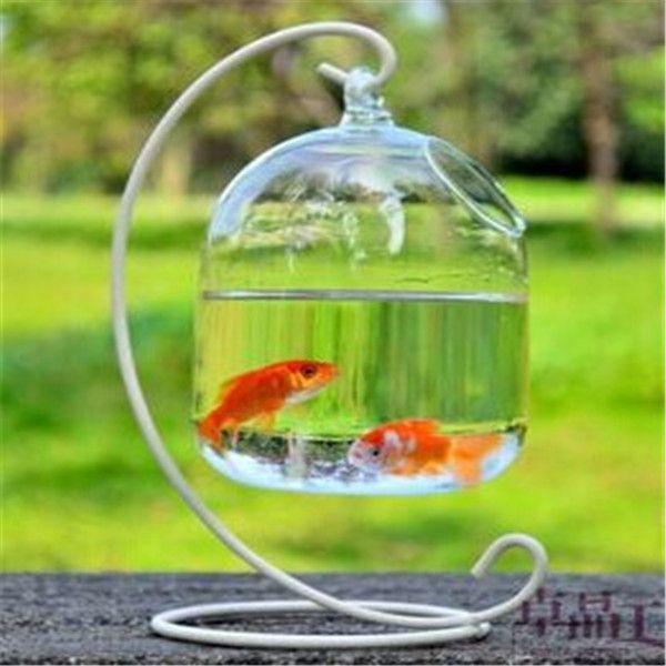 The 25 best ideas about aquarium pas cher on pinterest for Recherche aquarium pas cher