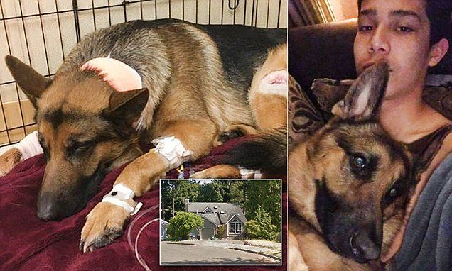 'Hero dog' is shot trying to protect teen from burglars