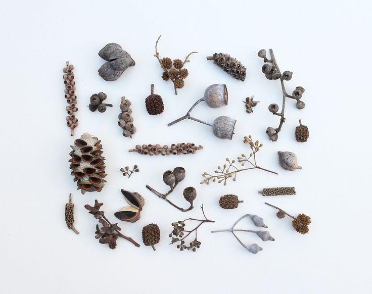 Australian Seed Pods I print