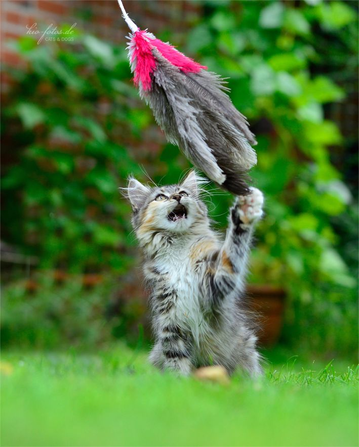 Got ya! Check out our Ostrich feather toys :)