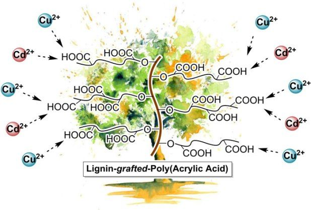 Advances in Engineering features: Lignin-graft-poly(acrylic acid) for enhancement of heavy metal ion biosorption