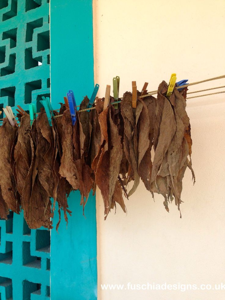 Tobacco being dried on a wall at the Pelican Village in Barbados. By www.fuschiadesigns.co.uk.