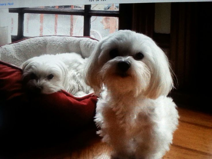 Rosie and Rocco relaxing