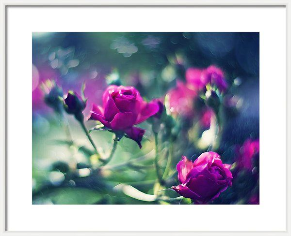 Love Framed Print featuring the photograph Beautiful Fuchsia Roses by Oksana Ariskina  Tender Fuchsia Roses over blurred bokeh dark green backdrop. Available as posters, greeting cards, phone cases, throw pillows, framed fine art prints, metal, acrylic or canvas prints, shower curtains, duvet covers, tote bags and mugs  with my fine art photography online: www.oksana-ariskina.pixels.com