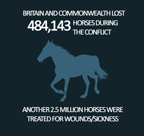 WW1 - War Horse Infographic