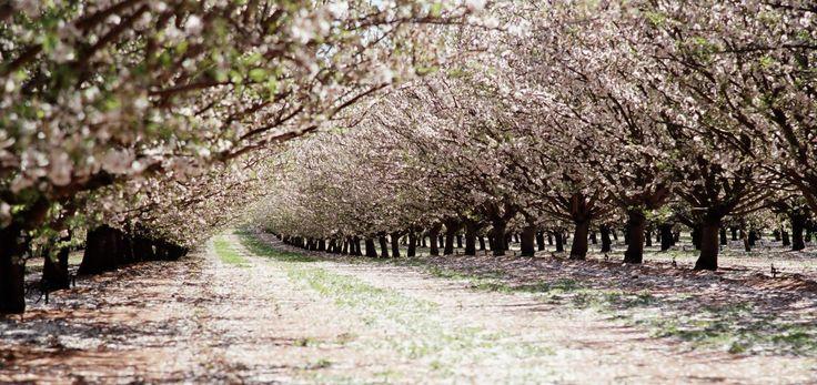 Australian Almonds - Almond Board Australia
