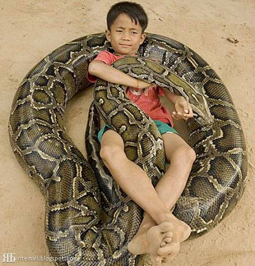 """When this Cambodian boy was just three months old, his father found a half-metre python in his bed.    The father did not kill the reptile, and took the snake back into the jungle, but the next day the snake crawled in again.    The python was taken back to the jungle three times, but he stubbornly came back. """"Lucky"""" grew up to 6 feet and weighs about 100 kg."""
