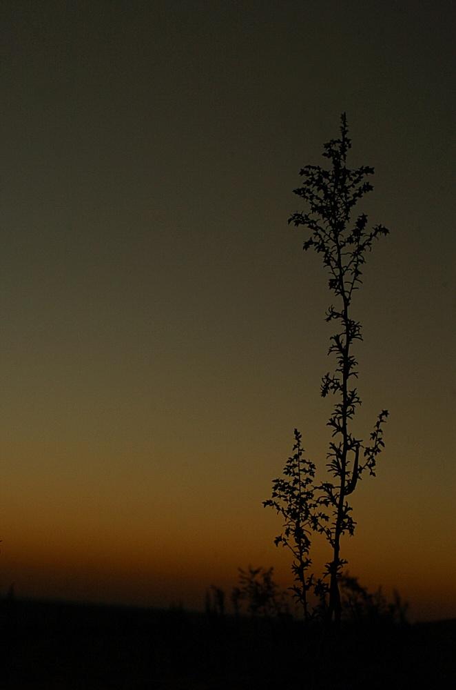 #RodAkelPhoto 4. Symphony of Silence - Saudi Arabia 2005 - Nikon D2H Sigma 24-70 @ 42mm f/9 1/80