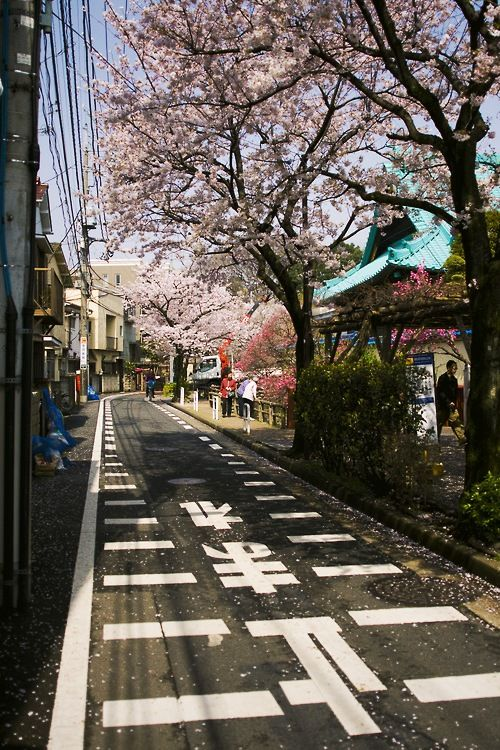 Planning to go to Japan in September... Already planning to go back during sakura season...