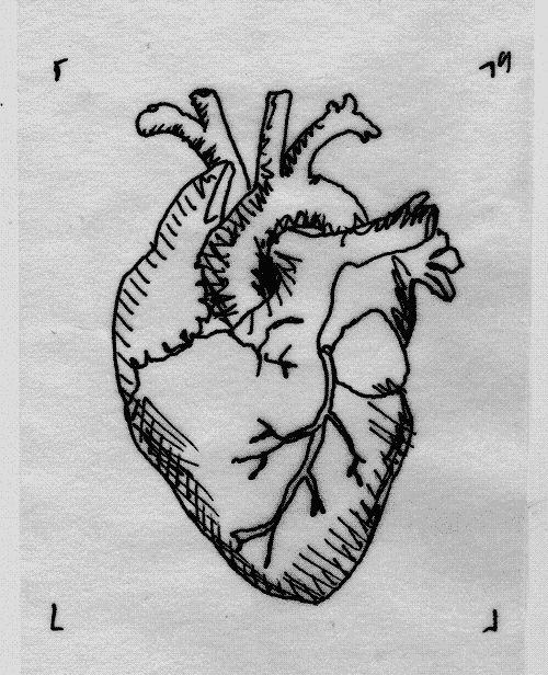 best 25+ human heart ideas on pinterest | human heart drawing, Muscles