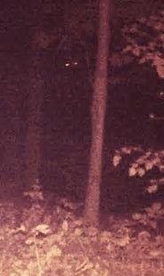 Image result for Pennsylvania Bigfoot Sightings