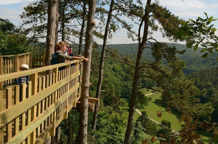 Het Wildpark van de Grotten van Han heeft er een nieuwe attractie bij: een wandelpad door de boomtoppen op 5 m hoogte.
