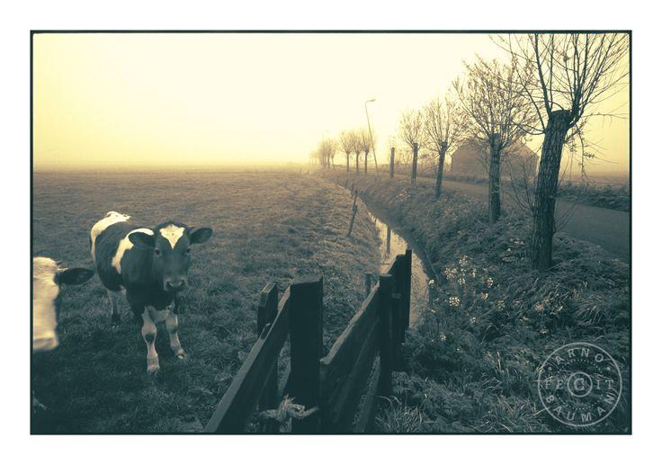 Dutch polder