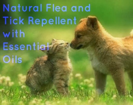 51 Best Images About Essential Oils For Ticks And Fleas On