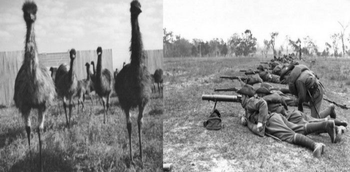 The Great Australian Emu War Of 1932 Was Against Flightless Birds
