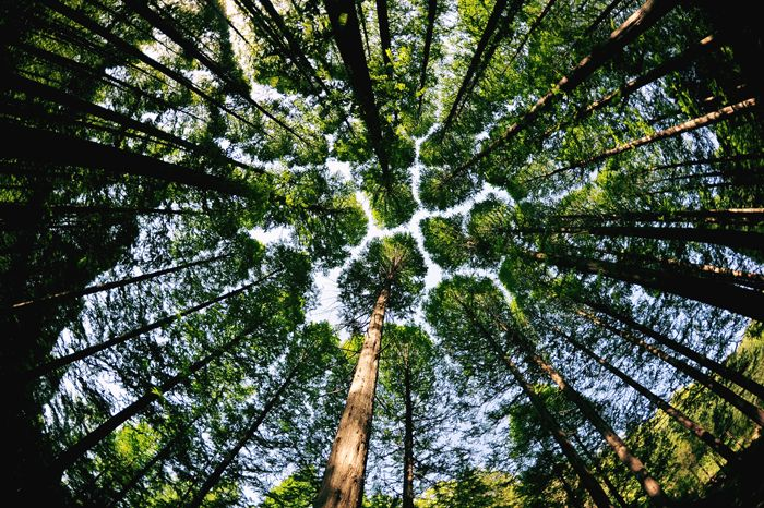 산림문화작품공모전 입선/김희경(숲의 품) ※ 본 저작물의 무단전제 및 재배포를 금합니다. copyright ⓒ 2013 by 산림청(Korea Forest Service) All pictures can not be copied without permission.