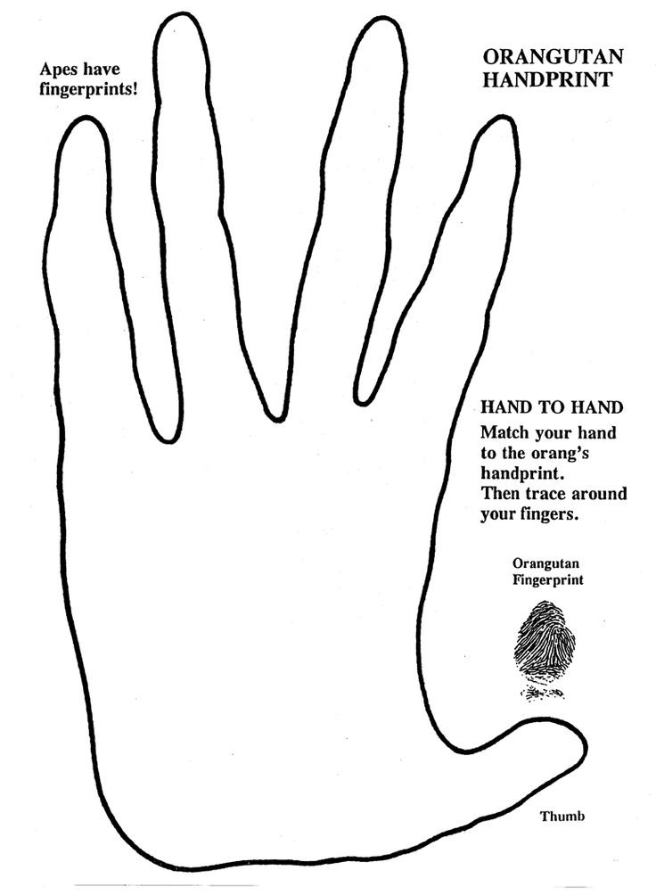 orangutan hand print School