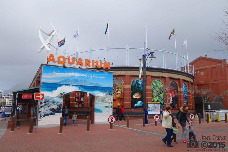"""In Kapstadt unters Meer und auf den Berg Als ich 2004 das erste Mal in Kapstadt war, besuchte ich das """"Two Oceans Aquarium"""" und war damals begeistert. Das Wetter war für heute schlecht angesagt … https://www.overlandtour.de/in-kapstadt-unters-meer-und-auf-den-berg/  #Afrika #AfrikaTour #Kapstadt #PlatteklipGorgeHike #Südafrika #Tafelberg #TwoOceansAquarium twooceansaquarium_cape_town_2015_001"""