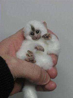 Miniature Monkey And Handmade On Pinterest