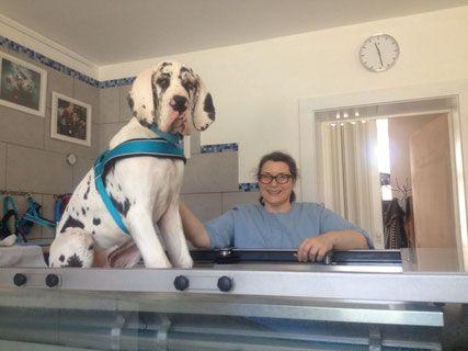 Im Interview: Eine Tierphysiotherapeutin mit großem Herz