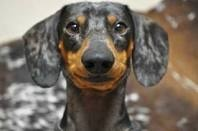 Doxie (whatta face on this one!)