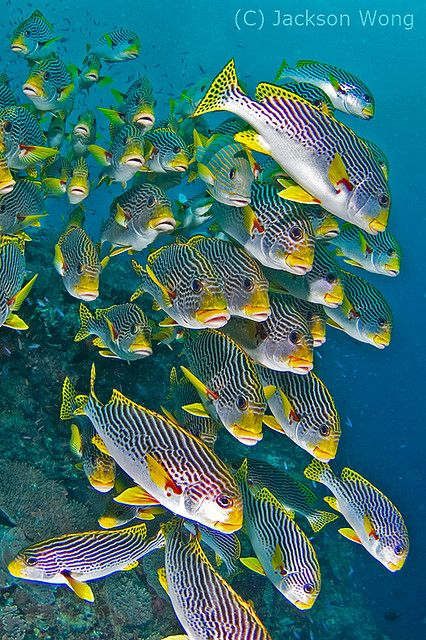 21 best images about under the sea    on pinterest