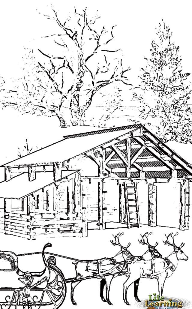 illustration7_colourin_reindeer