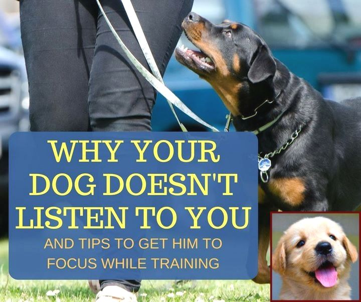 House Training A Puppy With Bells And Dog Training Classes