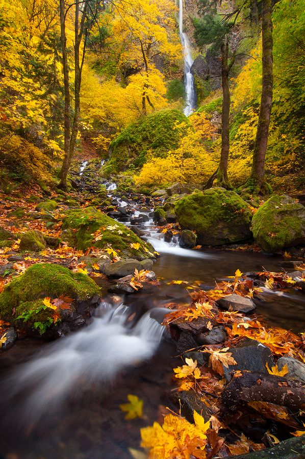 Amazing fall colors along the Columbia River Gorge in Oregon.