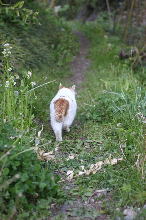 かえる - かご猫 Blog                                                                                                                                                                                 もっと見る