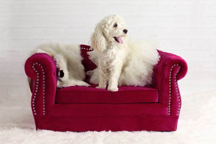 Gwen Yorkshire Dog Sofa