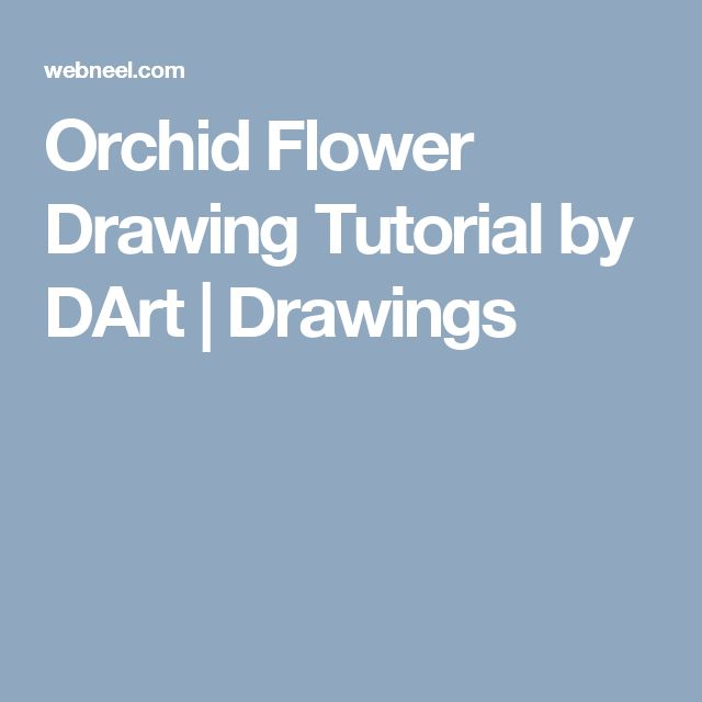 Orchid Flower Drawing Tutorial by DArt | Drawings