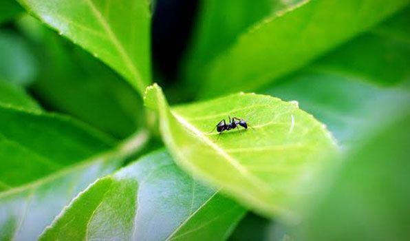 Mieren in de moestuin....gebruik nooit bestrijdingmiddelen....dat dood ook de Bijen....zie hier voor natuurlijke bestrijding van mieren met planten waar ze een hekel aan hebben.