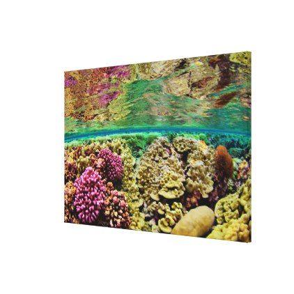 Hard Coral Carpets | Kingman Reef Pacific Ocean Canvas Print - ocean side nature waves freedom design